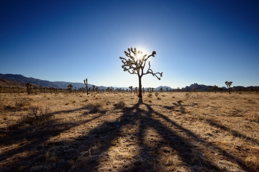 wpid-73_1joshua_tree_national_park.jpg